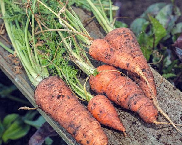 7 Easy Vegetables & Herbs to Grow at Home