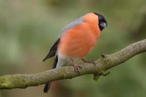The Secret Benefits of Attracting Garden Birds